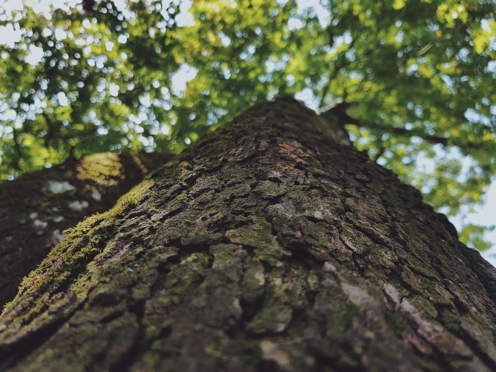 La production du bois au Brésil ne pourra pas excéder 35 ans