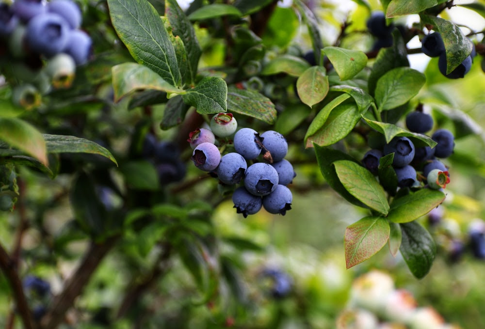 Top 5 Detoxifying Foods