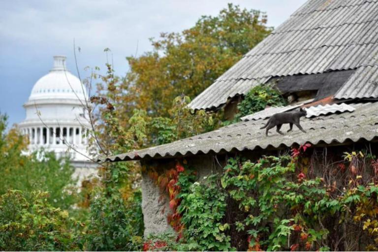 La ville de Washington dénombre ses chats