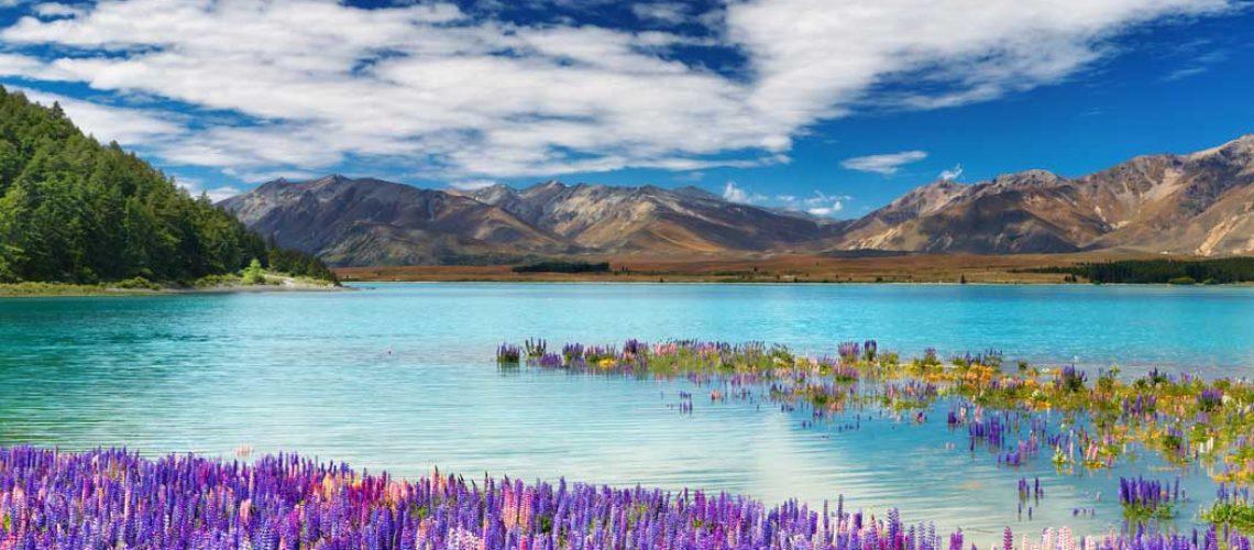 lake-tekapo-fleurs