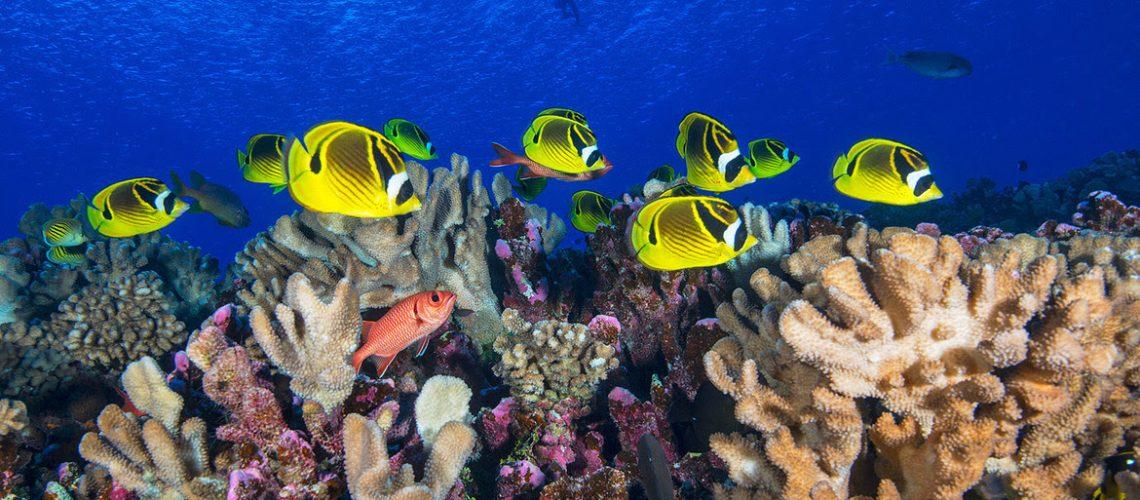 Océan Image Bank/Jane Jenkins Des poissons de récifs coralliens nagent en Polynésie française, dans l'océan Pacifique.